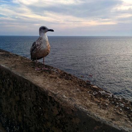 Vista muros Dubrovnik 16