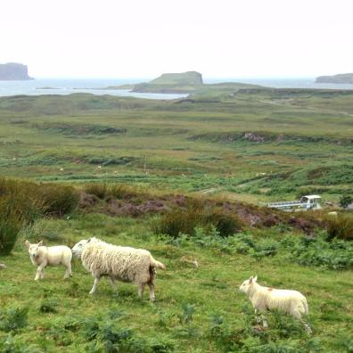 dun-beag-ovelhas