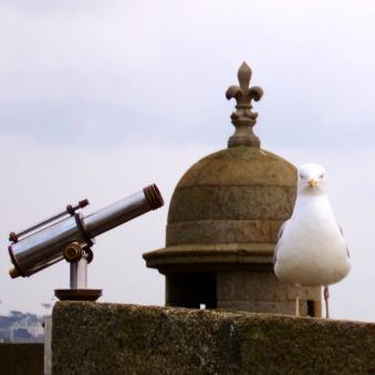 Gaivota nas muralhas St. Malo