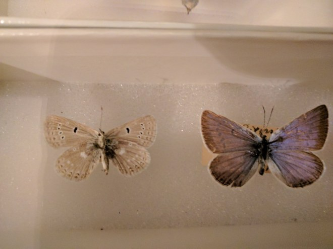 Casa museu Nabokov Petersburgo borboletas