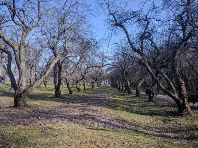 Moscou parque Kolomenskoye macieiras