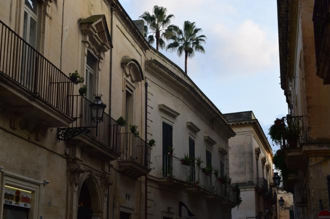Puglia Lecce palmeiras