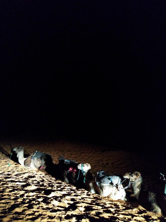 Saara Marrocos andando de camelo de manhã